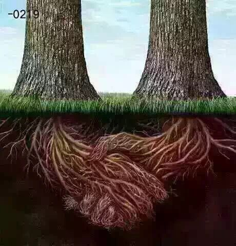 tree20160220130216